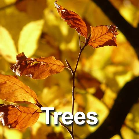 Best Trees for the Big Country